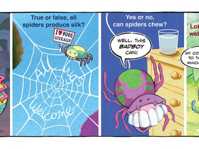 Funky_Facts-Spiders